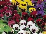 Как садить цветы семенами или луковицами?