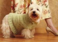 Как связать свитер для собаки?