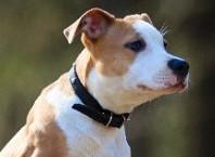 Как приучить собаку к ошейнику: ценные советы