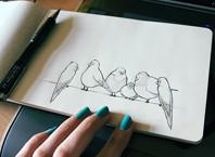 Как рисовать птицу карандашом