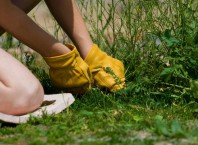 Которые существуют методы борьбы с сорняками?