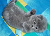 Как отличить котенка мальчика от девочки?