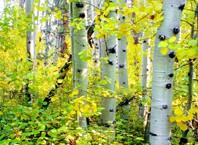 Что делать, если человек заблудился в лесу?