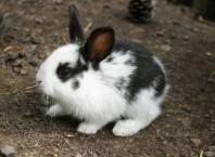 Как кормить и присматривать за кроликами?