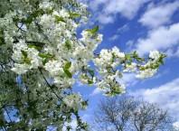 Середина весны