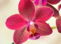 Как присматривать за домашней орхидеей: советы новичку