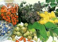 Известнейшие 5 врачебных растений