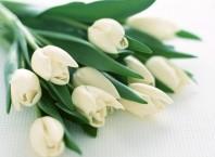 Как оформить букет белых тюльпанов?