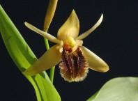 Как посадить орхидею из Вьетнама: пошаговая инструкция