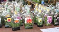 Как вырастить орхидею «с бутылки»?