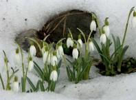 В котором месяцы наступает весна?