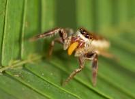 Как передвигается паук?