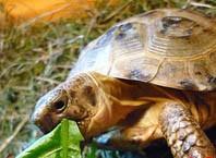 Как правильно кормить черепаху?